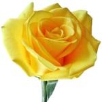 Farvesymbolik gul